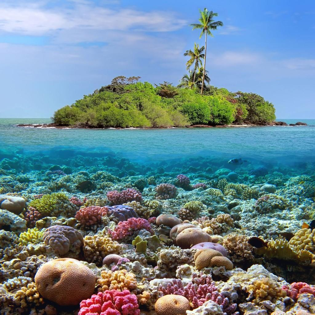 Coral-island-and-reef-sharks-Siam-Bay-Thailand