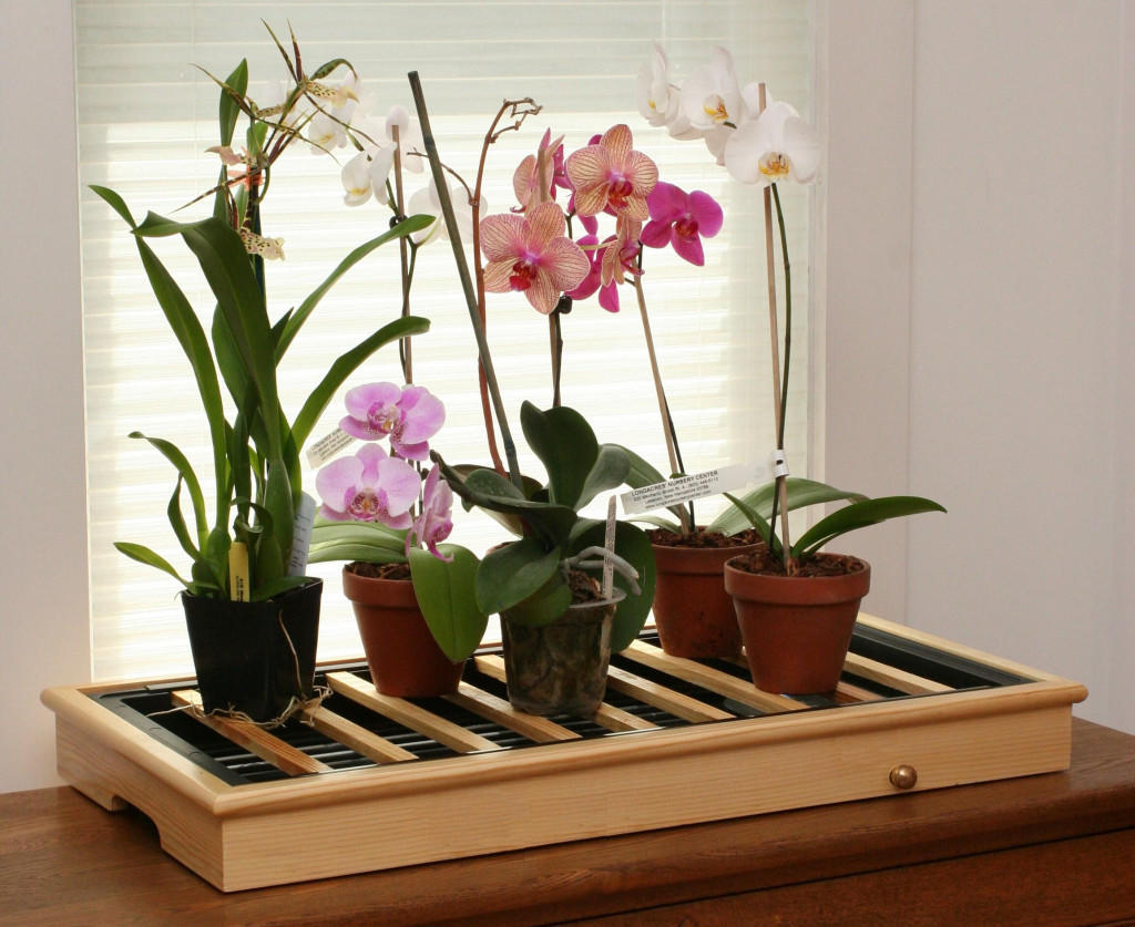 humidity-tray-with-maple-frame