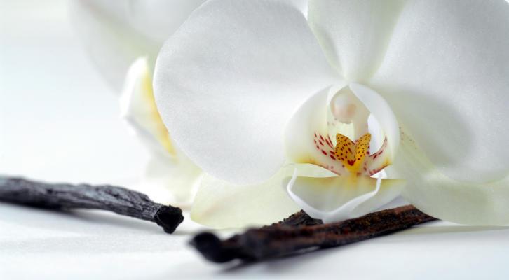 Вечная любовь: 6 косметических продуктов с нотами ванили